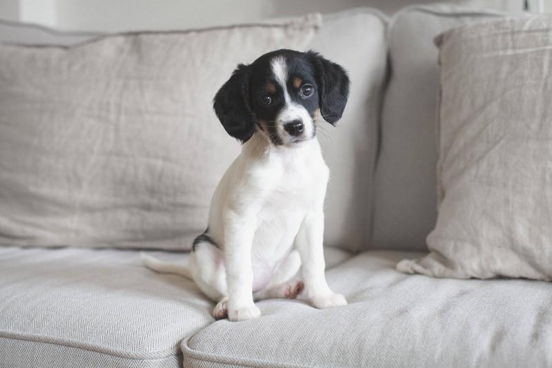 Hunde sollten wissen was sie dürfen und was nicht, wenn nicht sind sie gestresst, was ebenfalls ein No-Go ist