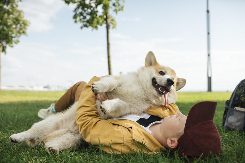 Jeder Hund will lieb gehabt werden, doch es geht auch zu viel