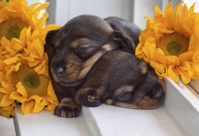 Schlafende Hunde sollte man nicht wecken