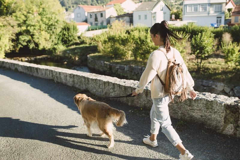 Spazieren gehen reicht nicht für den Hund, sie können es nicht ausstehen wenn er langweilig ist