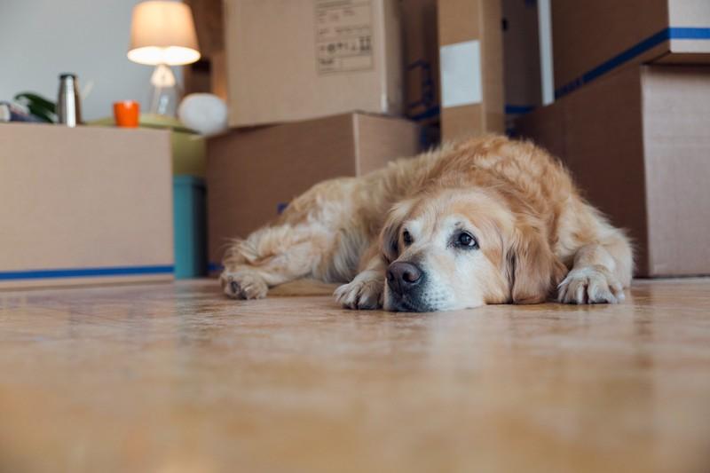 Streit kann auch kein Hund ausstehen und ist daher ein No-Go für ihn