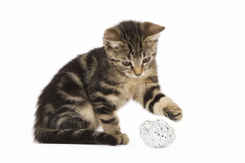 Eine Katze mit einer Kugel aus Alufolie