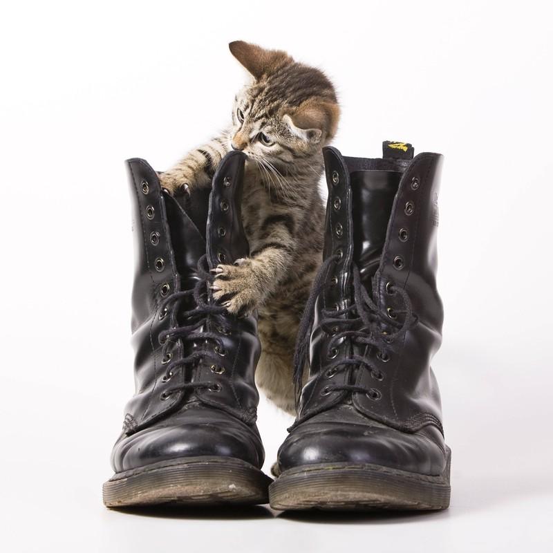 Eine Katze spielt mit einem Paar Stiefel