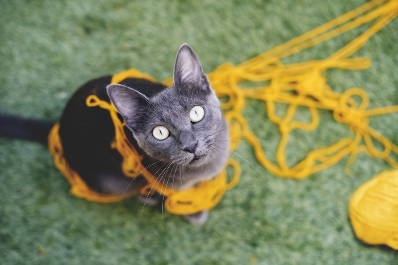 Katze in einem Wollknäuel