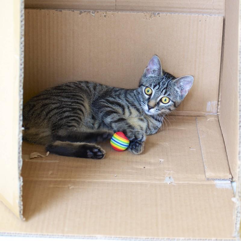 Katze spielt mit einem kleinen Ball in einer Kiste