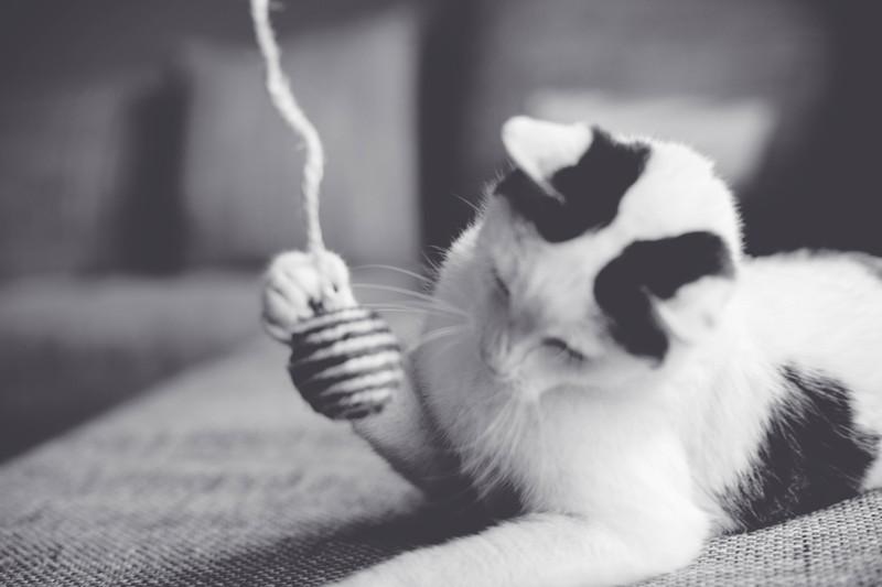 Schwarzweißfoto einer Katze mit Spielzeug: Manche Spielzeuge können für Katzen gefährlich werden