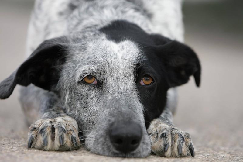 ein weiterer Trick für Hunde ist das kriechen / Robben