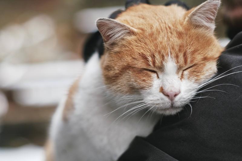 Eine Katze kuschlelt sich gut an ihren Menschen: Mit dem Verhalten zeigt sie in Katzensprache Zeneigung