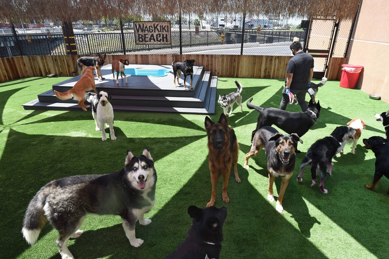 Border Collie im Hunde-Quiz