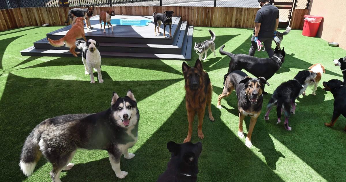 Hunde-Quiz: Erkennst du die Hunderasse anhand eines Bildes?