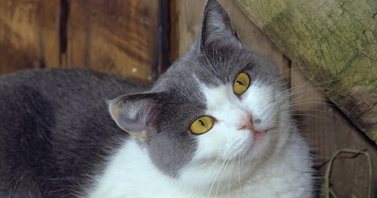 Was möchte dir deine Katze mit ihrer Mimik verraten?