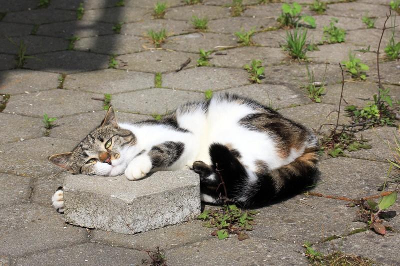 Eine Katze ist rollig
