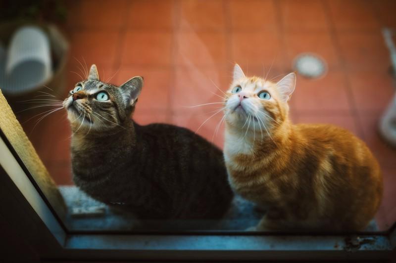 Zwei Katzen wollen raus