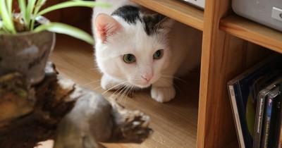 Ist deine Katze krank? 10 Anzeichen, dass es ihr nicht gut geht