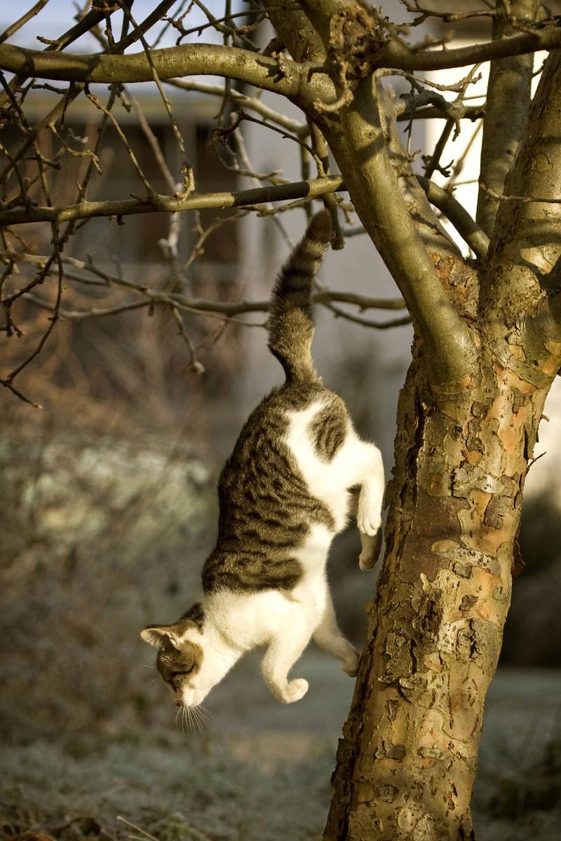 Eine Katze springt vom Baum: Ist sie krank? Anzeichen, die dafürsprechen