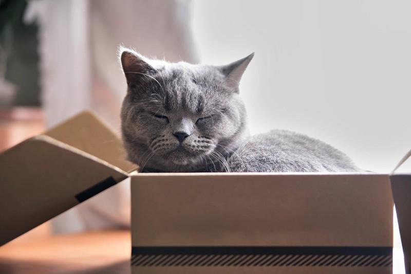 Ist deine Katze krank? 10 Anzeichen, dass es ihr nicht gut geht: Deine Katze will schlafen