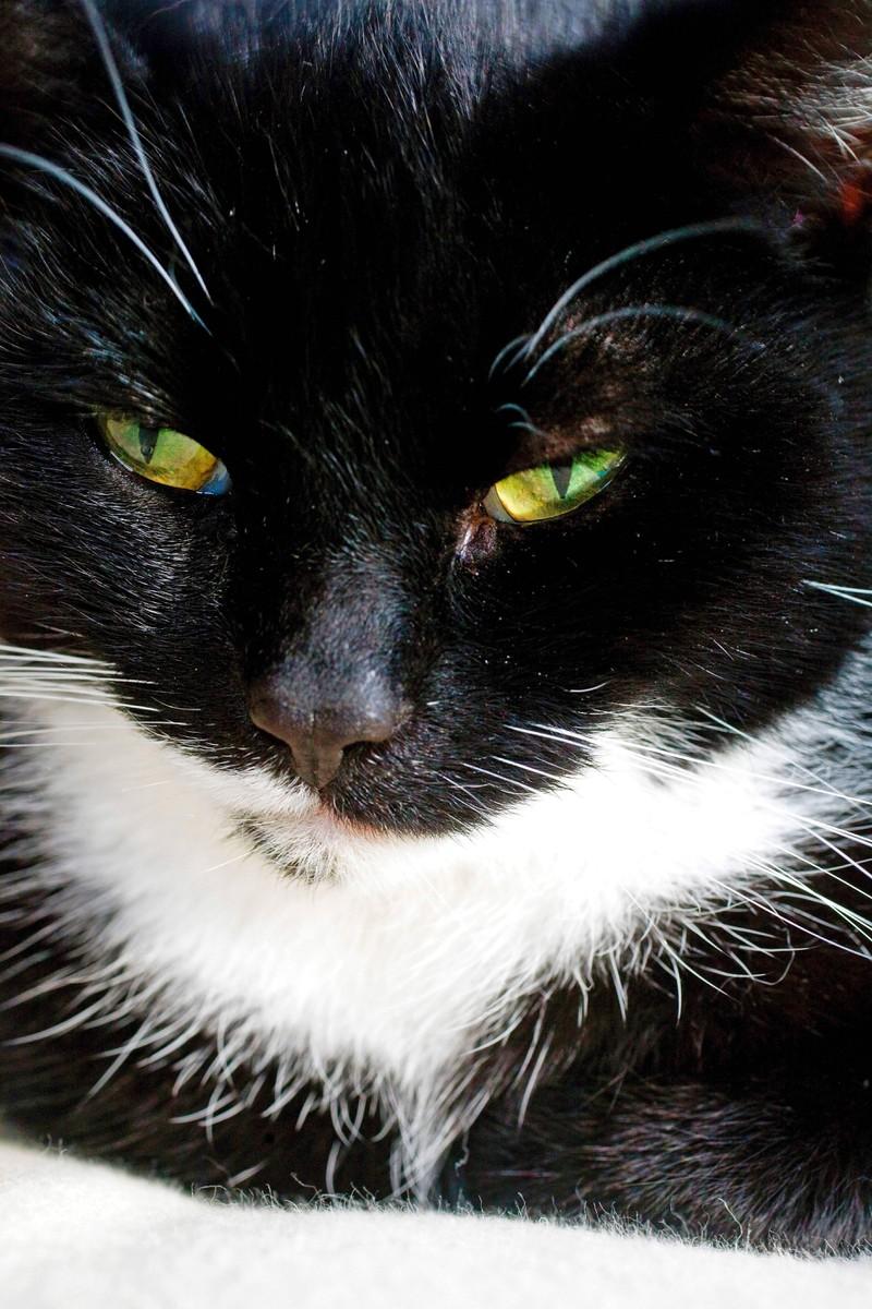 Ist deine Katze krank? 10 Anzeichen, dass es ihr nicht gut geht: Eine Hauskatze putzt sich nicht mehr