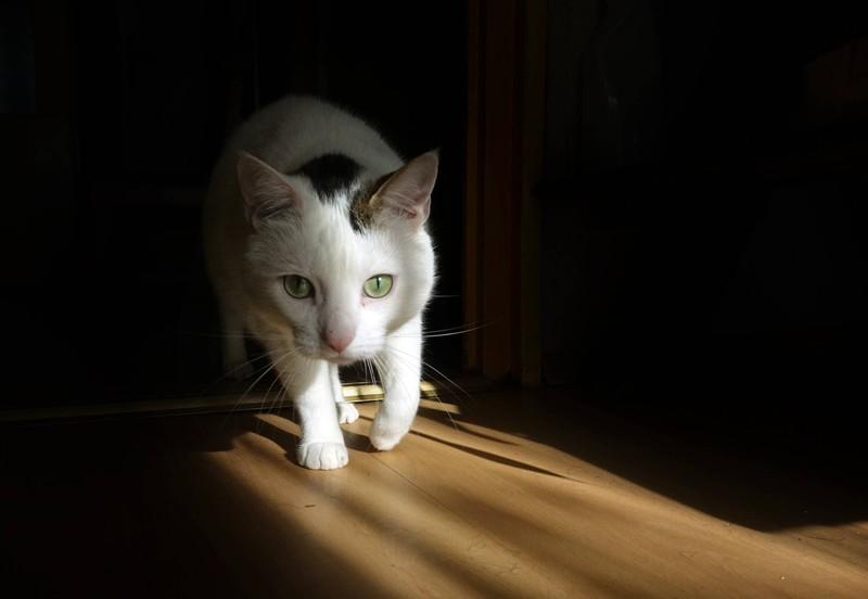Ist deine Katze krank? 10 Anzeichen, dass es ihr nicht gut geht: Katze schleicht ungewohnt
