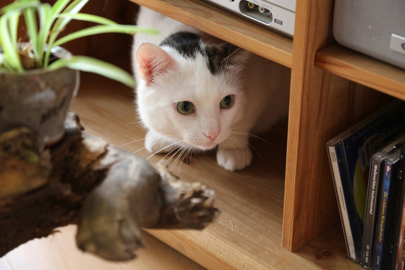 Katze versteckt sich