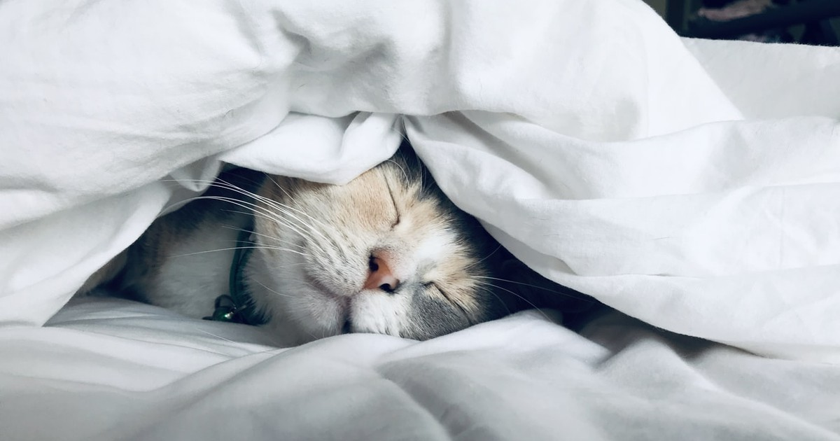 6 häufige Fehler, die man bei der Katzenerziehung machen kann
