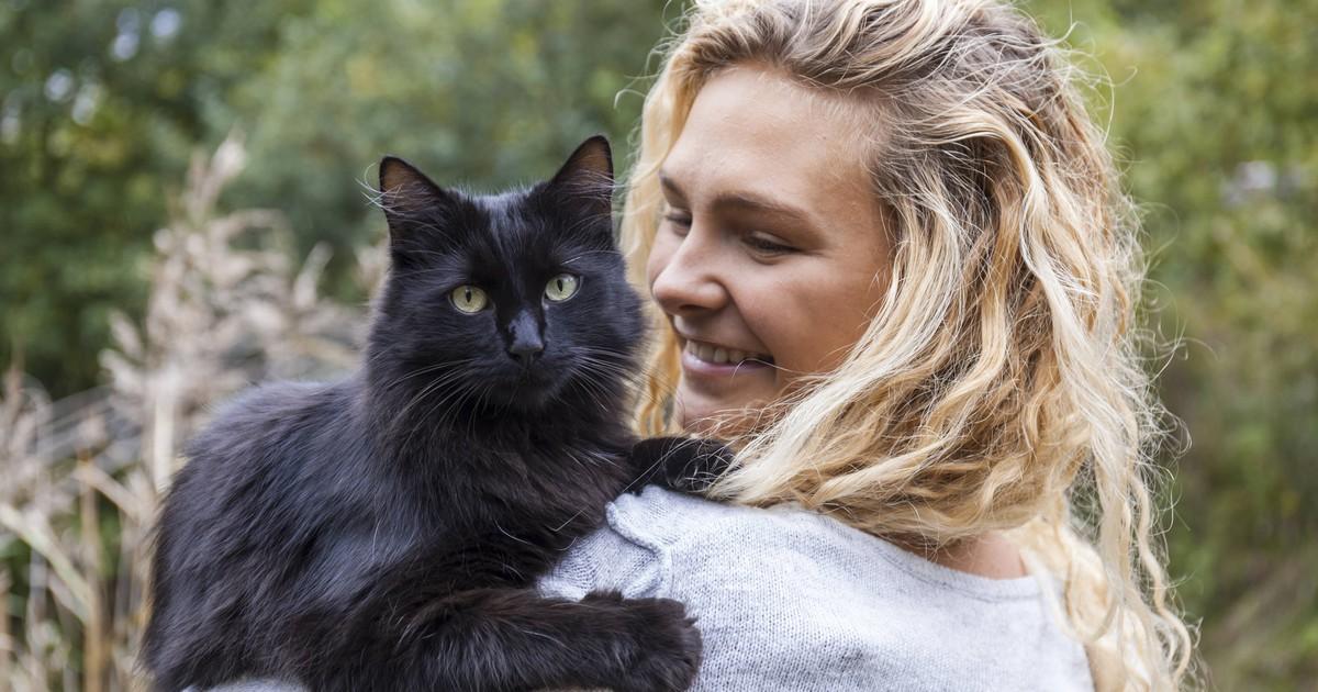 5 Tipps, wie du Stress und Frust bei deiner Katze vermeiden kannst