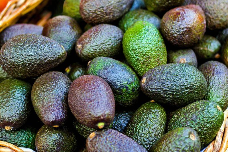 Avocados gehören zu den Lebensmitteln, die toxisch sind.