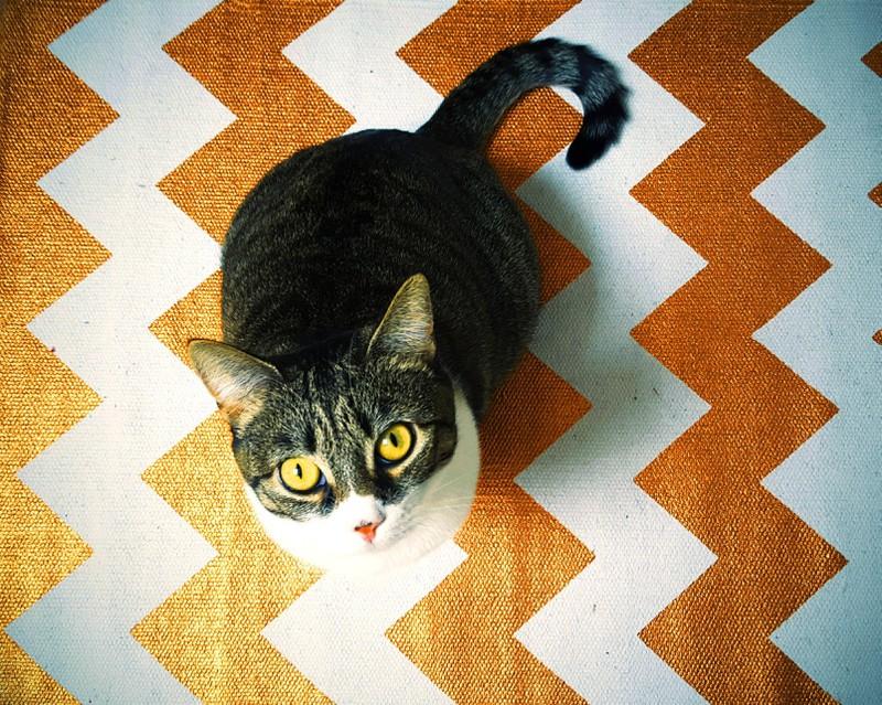 Eine Katze schaut bettelnd nach oben, weil sie Futter abhaben möchte: Doch Lebensmittel können für sie giftig sein.