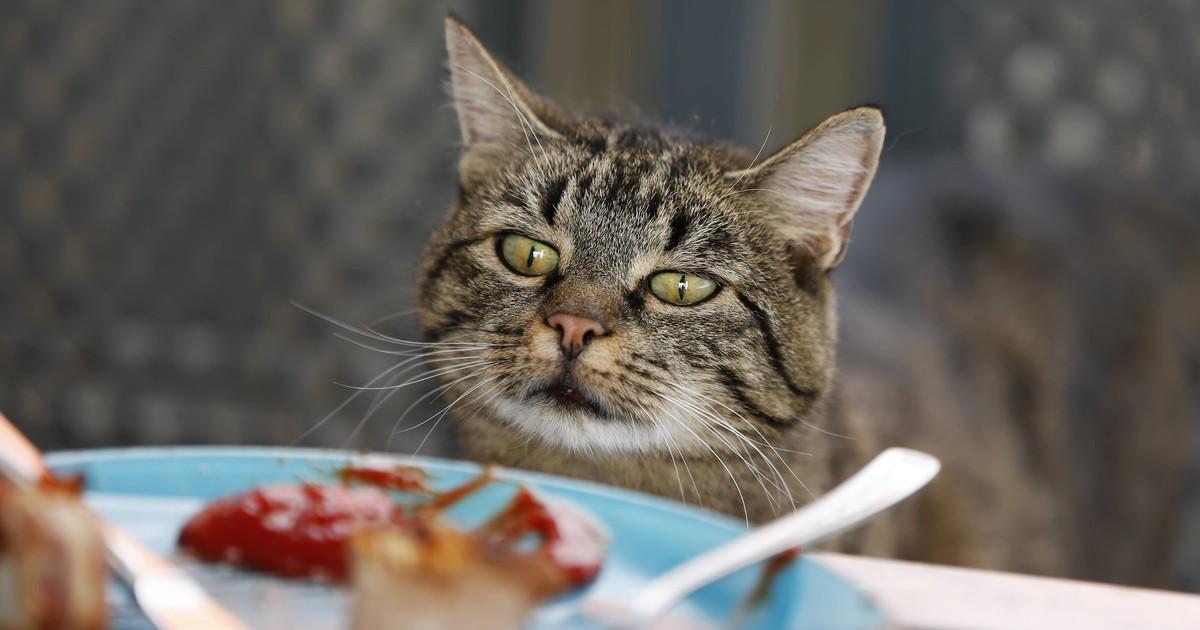 10 Lebensmittel, die giftig für deine Katze sind