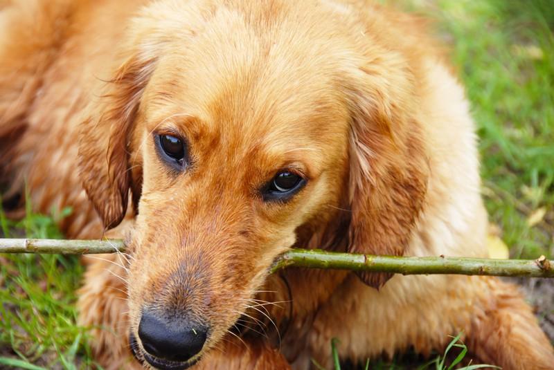 Auch Stress kann dafür sorgen, dass Hund knabbern