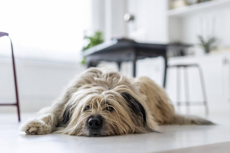 Hunde können auch aus Langeweile Dinge anknabbern