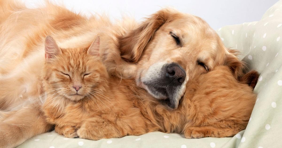 7 Tipps für ein harmonisches Zusammenleben zwischen Hunden und Katzen
