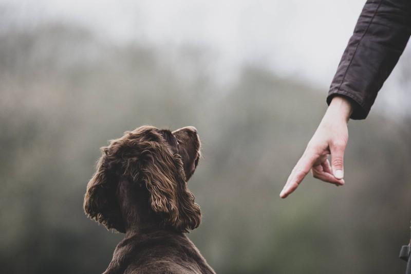 7. Tipp: Im Zusammenleben ist es besonders wichtig, sowohl den Hunden als auch den Katzen Einhalt zu gebieten und Regeln festzulegen. Die Tiere müssen dich oder euch als BesitzerIn akzeptieren.