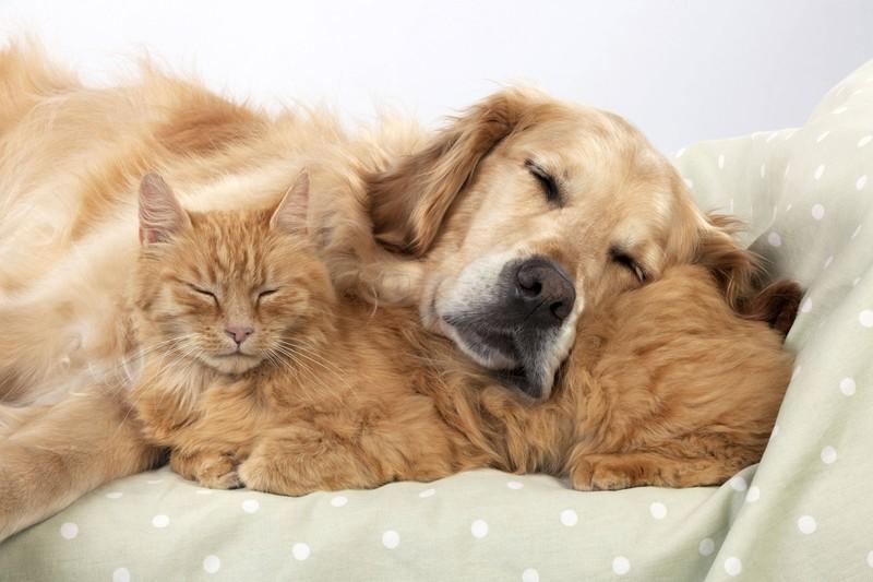Auch Hunde und Katzen können zusammenleben, wenn sie gelernt haben, sich gegenseitig zu akzeptieren.
