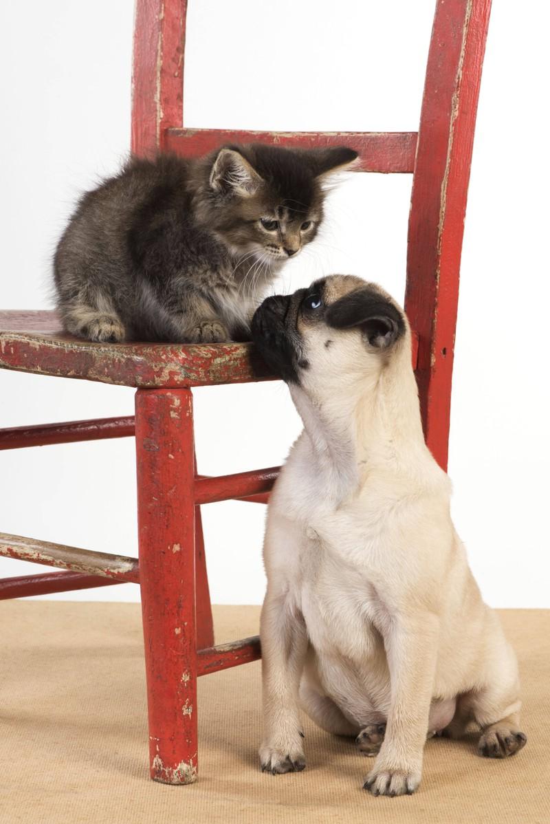 Einer der 7 Tipps, wie Katzen und Hunde lernen zusammen zu leben: Die Tiere sollten sich beim ersten aufeinander Treffen behutsam annähern.