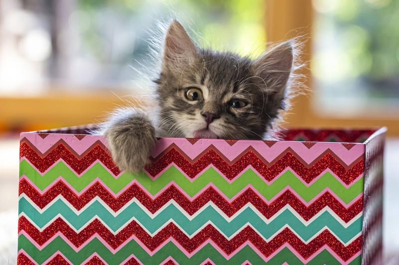 """Katzen können sehr eigenwillig sein, aber sind in der Lage Hunde in """"ihrem"""" zu Hause zu akzeptieren. Wichtig für den Besitzer ist es, beiden Haustieren gleich viel Liebe zu schenken."""
