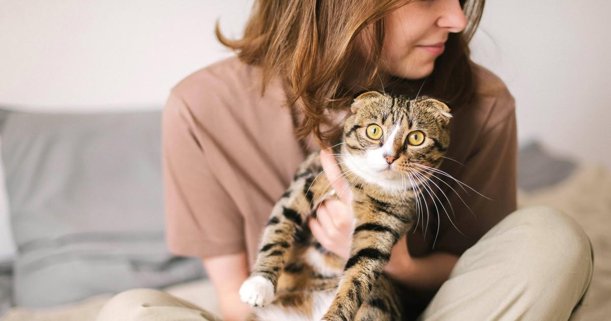 4 Fehler, die du bei der Katzenerziehung vermeiden solltest