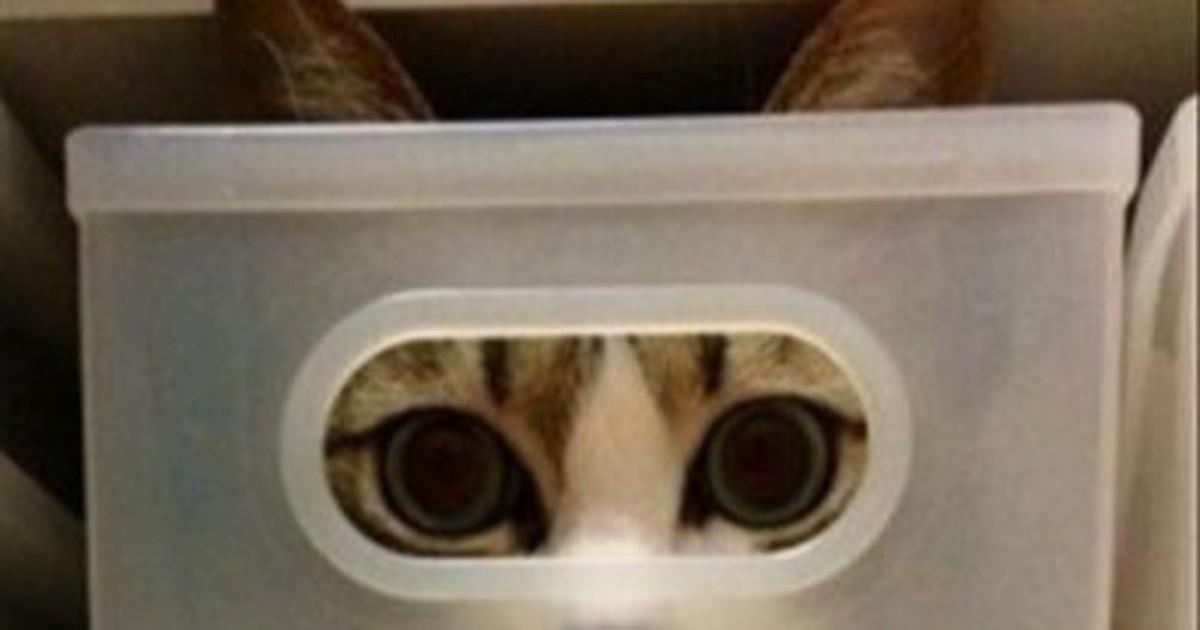 25 süße Katzen, die sich verstecken und dabei kläglich scheitern!