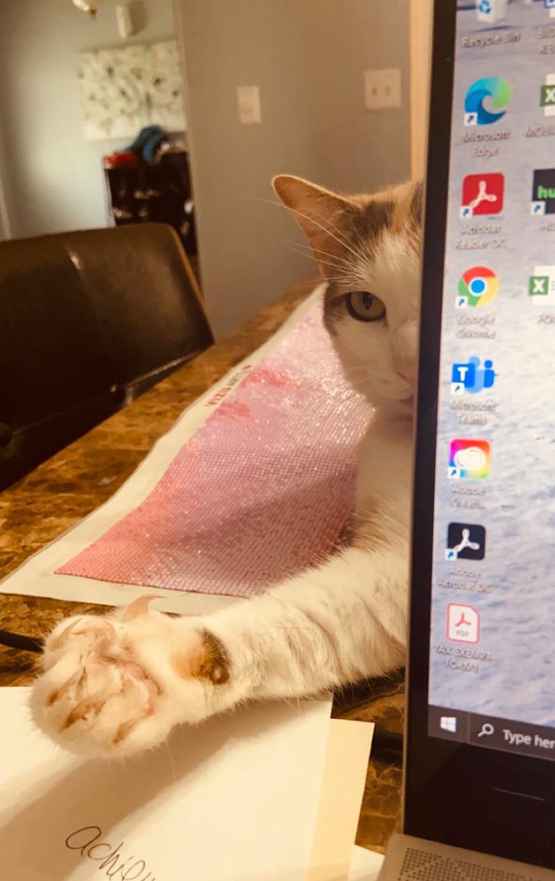 Das Bild illustriert eine Katze, die sich hinter einem Laptop verstecken will