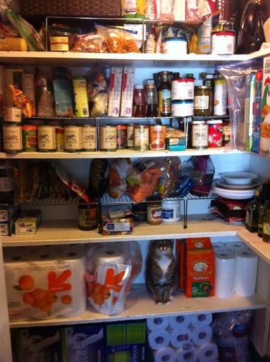 Das Foto zeigt eine Katze die sich in einen Lebensmittelschrank einreiht und so tarnt