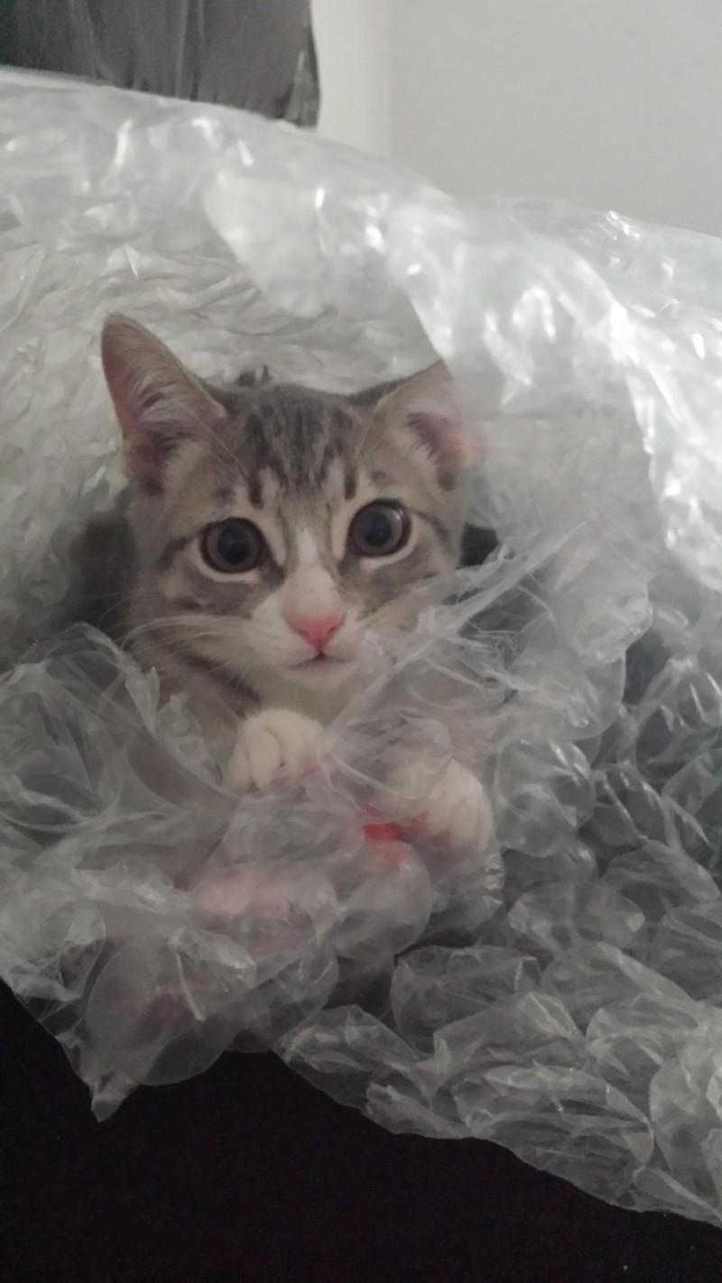 Das Foto zeigt eine Katze, die sich verstecken wollte, aber kläglich scheiterte