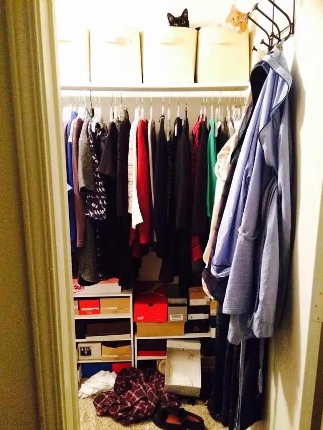 Das Foto zeigt zwei Katzen, die oben im Kleiderschrank sitzen und sich verstecken wollten