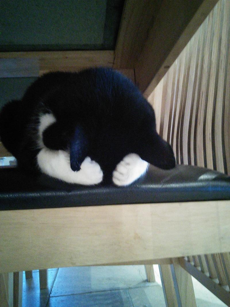 Die Katze versteckt sich hinter ihren eigenen Pfoten.
