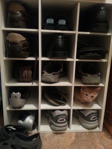 Eine Katze, die nicht auffallen will und sich an die Umgebung anpasst, um sich zu verstecken