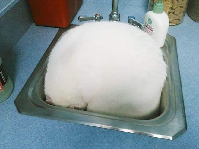 Eine Katze die sich unscheinbar verstecken wollte, was sie nicht geschafft hat