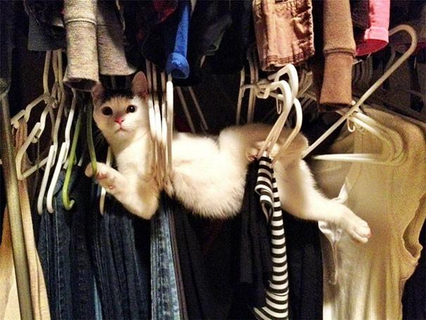 Es ist eine Katze auf dem Foto, die sich versucht hat zu verstecken und an der Stange erwischt wurde