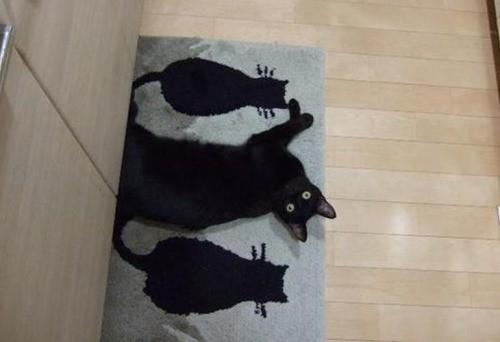 Es ist eine Katze zu sehen, die sich mit einer Präzision an die Fußmatte schmiegt