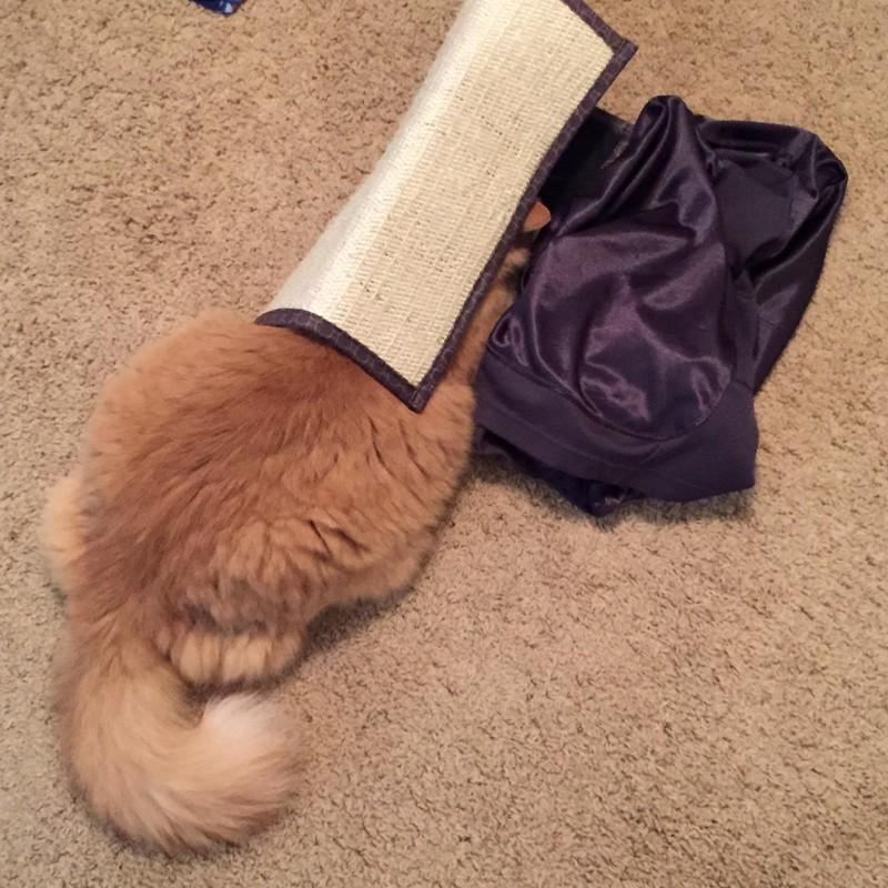 Es ist eine süße Katze zu sehen, die sich unter der Fußmatte versteckt, was ein Klassiker unter den Verstecken ist