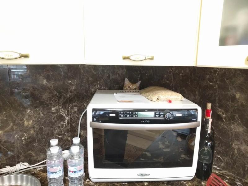Man sieht auf dem Foto eine Katze, die sich hinter einer Mikrowelle verstecken will