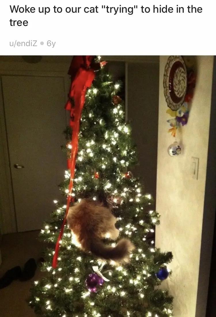 Man sieht eine Katze die kläglich versucht, sich im Weihnachtsbaum zu verstecken