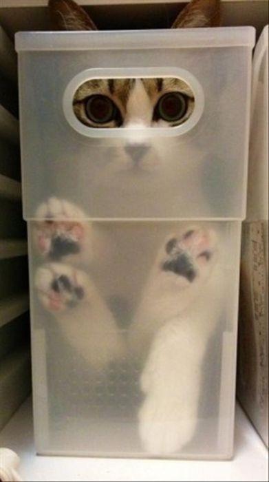 Man sieht eine Katze, die sich in einer durchsichtigen Kiste verstecken will